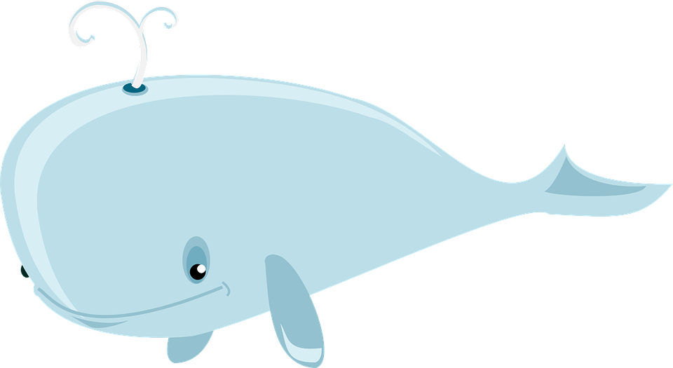cam whales